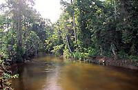 Riachuelo en selva Amazonica, Parima, Amazonas, Venezuela.