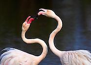 Wildlife Photography - Living World