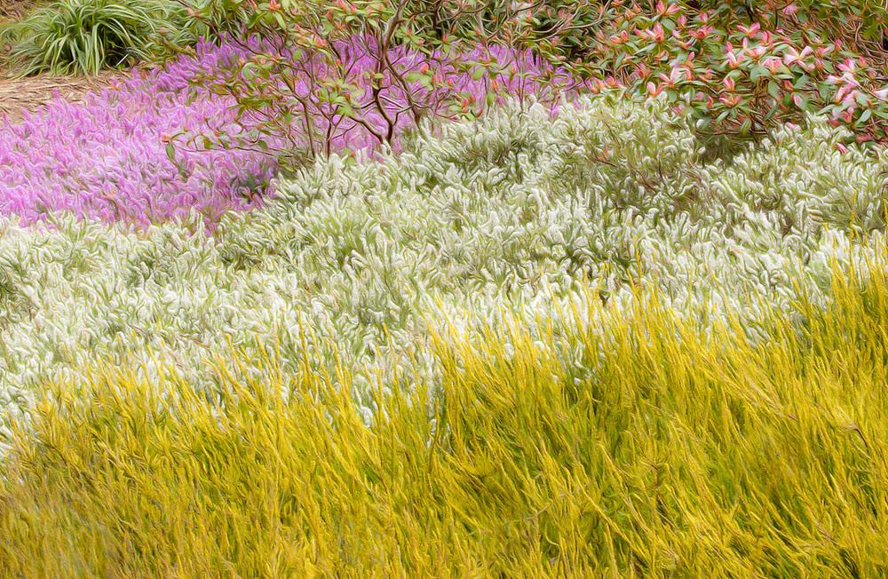 Washington Park Arboretum, Seattle, Washington, USA