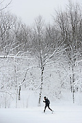 Woman cross-crountry skying in Snow covered Mont Royal Park in Winter, Parc du Mont Royal, Montreal, Quebec, Canada