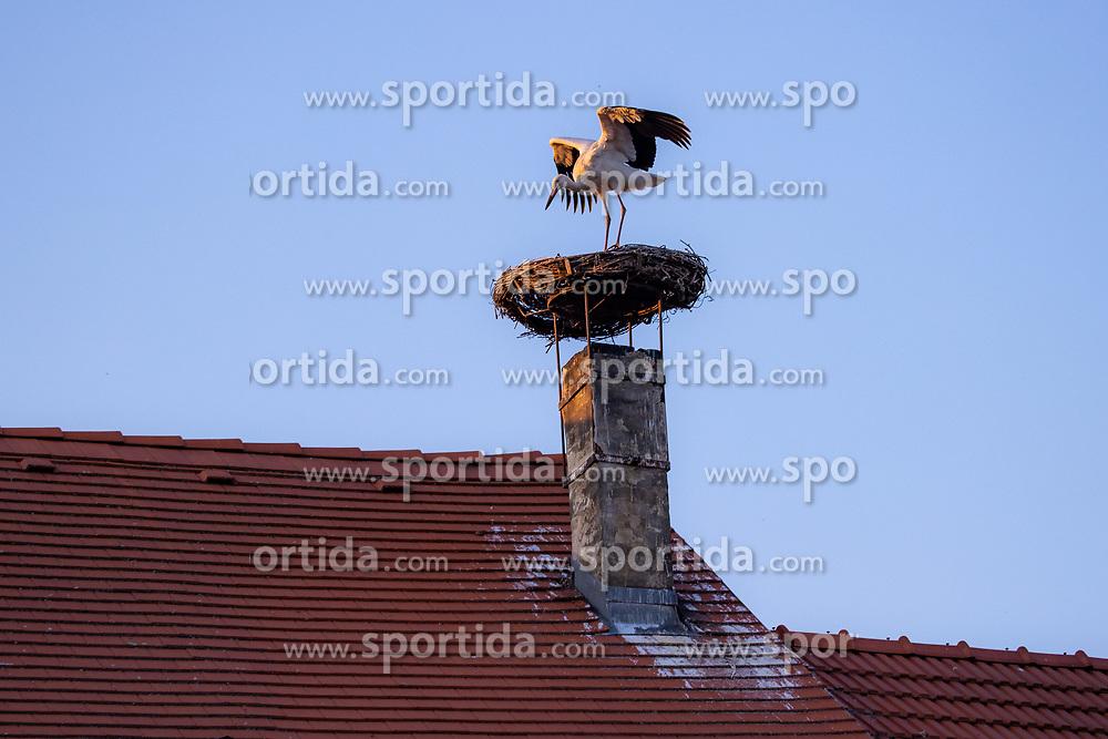 THEMENBILD - Die Freistadt Rust am Neusiedlersee wird auch Hauptstadt der Stoerche genannt. Der Weissstorch (Ciconia ciconia) zaehlt zu den groessten Landvoegeln Europas. Das Federkleid ist bis auf die schwarzen Schwungfedern rein weiss. Schnabel und Staender sind rot. Hier im Bild ein Weissstorch mit ausgebreiteten Schwingen in seinem Nest am Kamin eines Ruster Wohnhauses am Dienstag 15. September 2020 in Rust // The free city of Rust on Lake Neusiedl is also called the capital of the storks. The white stork (Ciconia ciconia) is one of the largest land birds in Europe. The plumage is pure white except for the black flight feathers. Beak and pennants are red. Here in the picture a white stork with outstretched wings in its nest on the chimney of a house in Rust on Tuesday 15 September 2020. EXPA Pictures © 2020, PhotoCredit: EXPA/ Johann Groder