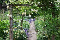Rosa 'Goldfinch' and honeysuckle growing over an arch in The Old Garden at Hidcote Manor