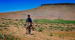 A shepherd on a donkey in the Atlas Mountains, Morocco<br /> <br /> (c) Andrew Wilson   Edinburgh Elite media