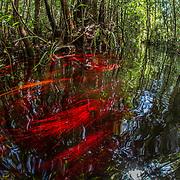 Sabangau Peat-Swamp Forest