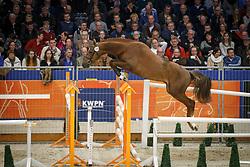 339 - Gilavsco Fortuna<br /> KWPN Stallion Selection - 's Hertogenbosch 2014<br /> © Dirk Caremans