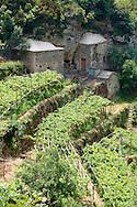 Vineyards of the Amalfi Coast, Italy