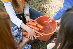 Group of friends washing carrots at picnic, Munich, Bavaria, Germany