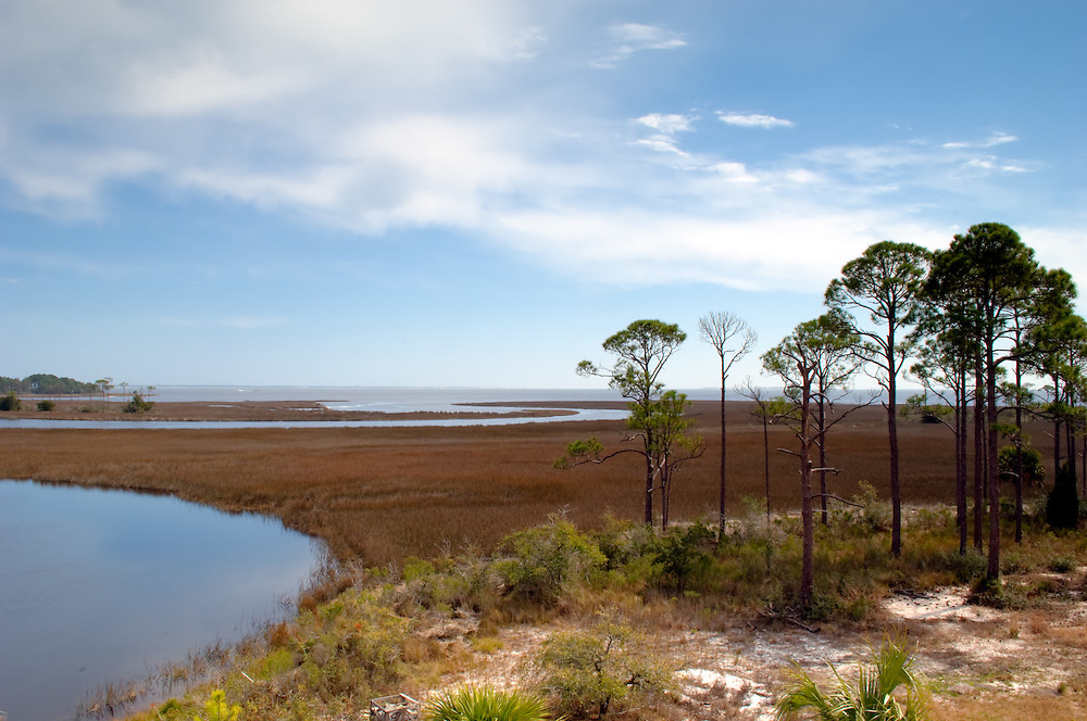 Salt marshes along the Florida Panhandle Coast. This brackish waterway to the Gulf of Mexico plays a key role in the life cycle of most of our marine and estuary sealife.