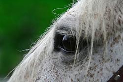 Detalhe de um cavalo tostado no 12 Rodeio Internacional do Mercosul, um dos maiores eventos do gênero. FOTO: Jefferson Bernardes/Preview.com