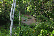 Coca - Saturday, Dec 22 2007: One of the clay licks at Yasuni National Park. (Photo by Peter Horrell / http://www.peterhorrell.com)