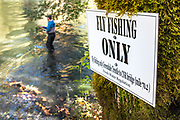 David Page casts to rainbow trout in fly fishing only water. Vancouver Island, BC