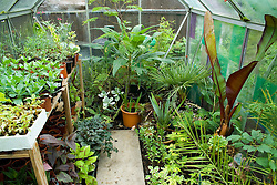 Greenhouse used to overwinter tender plants