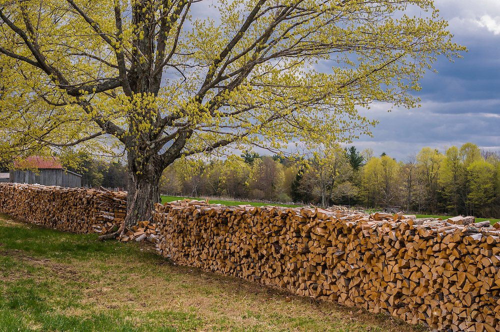 Wood pile, Sugar Maple, spring, Musterfield Farm museum, North Sutton, NH