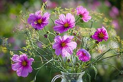 Informal arrangement of Cosmos bipinnatus 'Sonata Pink' and fennel in a glass vase. Foeniculum vulgare