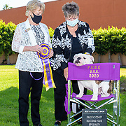 Pacific Coast Bulldog Club 2020