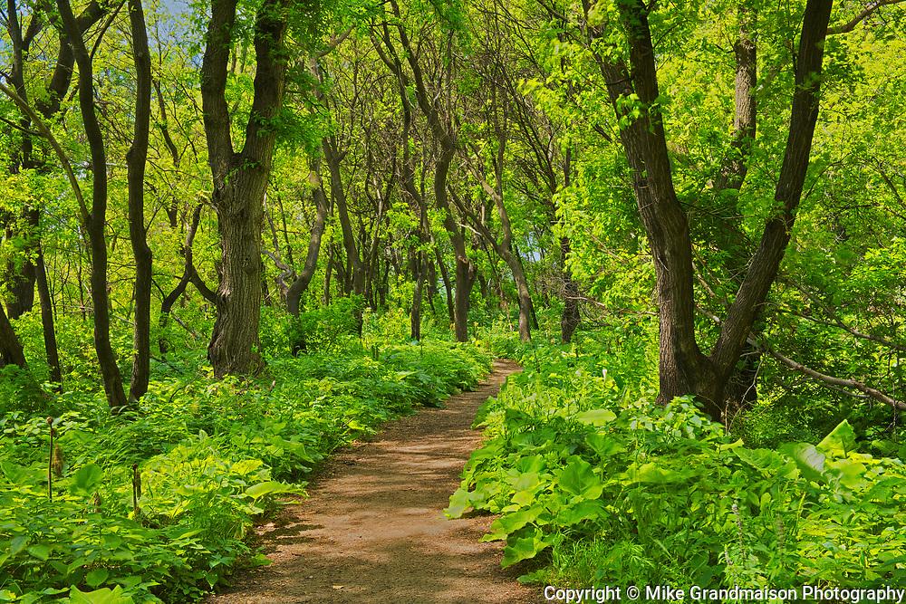 Pathway in McBeth Park<br />Winnipeg<br />Manitoba<br />Canada