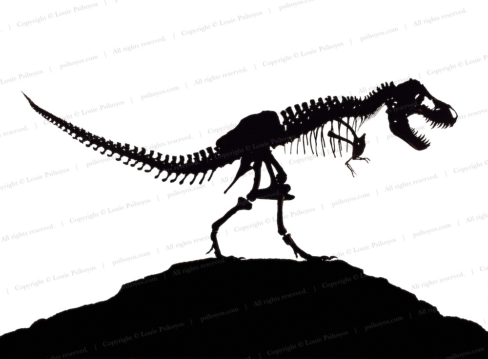 """Silhouette of the Tyrannosaurus called Stan.   This """"tyrant lizard king,"""" was excavated and prepared by the Black Hills Institute and named after the discoveror, Stan Sacrison."""