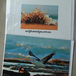 Northern Beaches Pelican