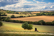 large fields on the South Downs in Sussex, England, UK on a summers evening during harvest.