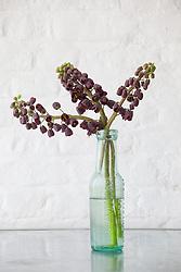 Fritillaria persica in a glass bottle vase