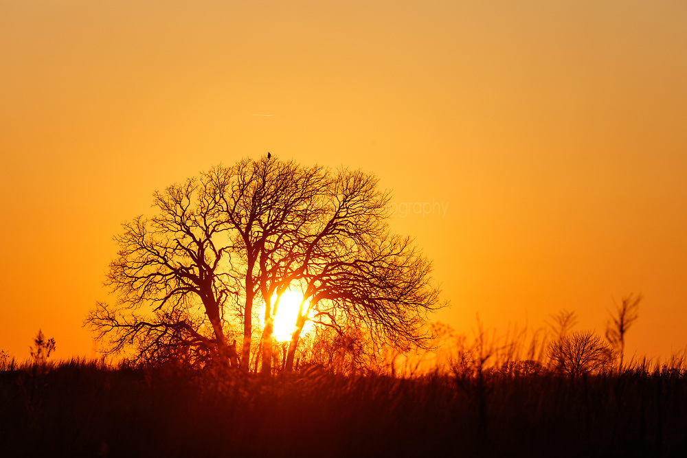 Sunset silhouette of raptor perched on tree on Daphne Prairie, a remnant of the Blackland Prairie, Mount Vernon, Texas, USA. The surrounding prairie had just been managed in a controlled burn