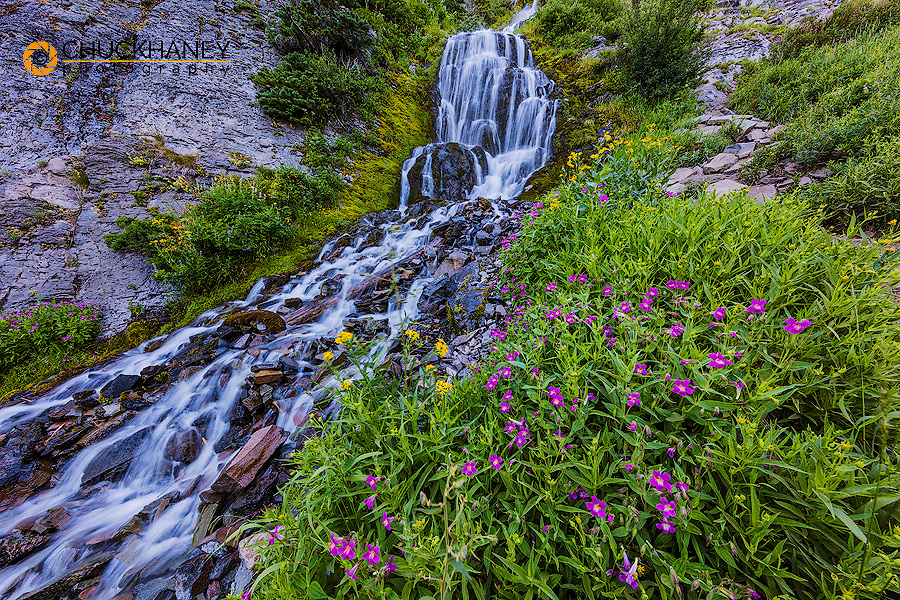 Wildflowers along Vidae Falls in Crater Lake National Park, Oregon, USA