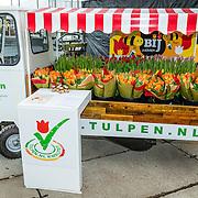 NLD/Roelofarendsveen/20170201 - Ontvangst dopen van Tulipa OG3NE,