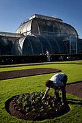 Staff plant new plants in beds outside the Palm House at Kew Gardens in the autumn, London. The Royal Botanic Gardens, Kew, usually referred to simply as Kew Gardens, are 121 hectares of gardens  and botanical glasshouses between Richmond and Kew in southwest London, England. It is an internationally important botanical research and education institution with 700 staff, receiving around 2 million visitors per year.