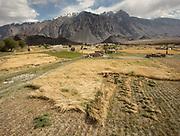 Wheat fields. In Roshorv village.
