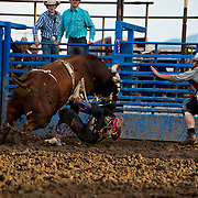 Brian Warren Red Eye Rodeo Duck Duck Goose at the Darby Broncs N Bulls event Sept 7th 2019.  Photo by Josh Homer/Burning Ember Photography.  Photo credit must be given on all uses.