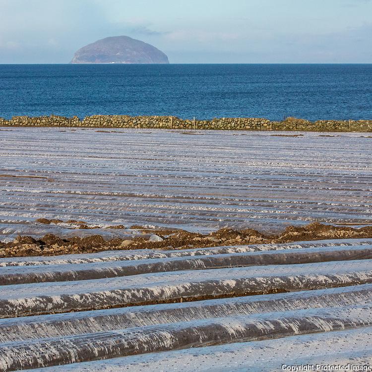 Potato fields with Ailsa Craig, Girvan, Ayrshire, Scotland.