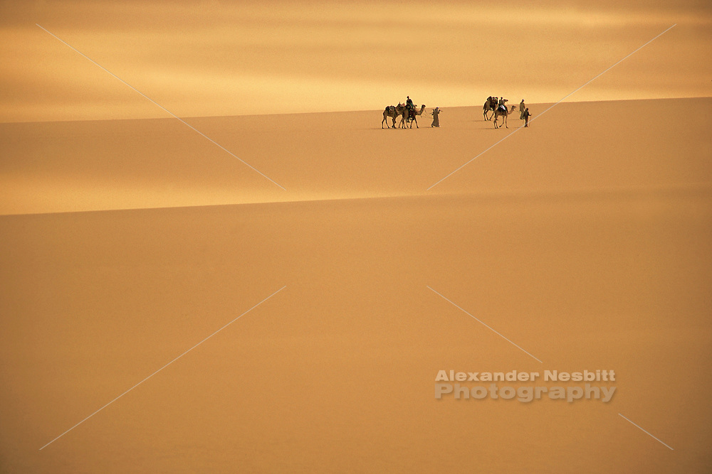 EGYPT - Egyptian Western desert, Bedouin guide leads a camel caravan on a trek along the Dharb el Dakhla track from Farafra Oasis to Dakhla Oasis through the dunes of the sand sea. Sun plays though patchy cloud to form bands of light across gentle dunes