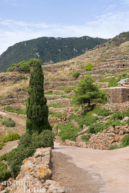 A vertical photo of the Pantelleria countryside near Montagna Grande with terraced dry-stone walls seen.