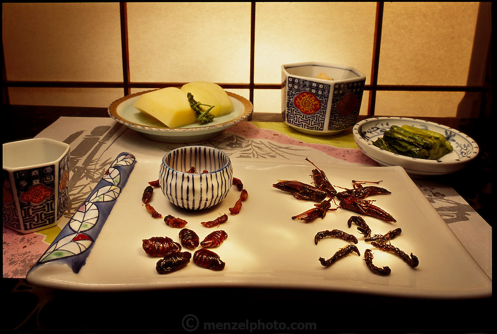 Arrangements of cold, canned, edible insects in an inn in Ina City. The various insects, zaza-mushi, grasshoppers, bee larvae, and silkworm pupae, are all cooked and canned in a brown sauce of sugar and soy, and therefore all possess the same flavor which masks their individual flavors, Ina City, Japan. (Man Eating Bugs page 36)
