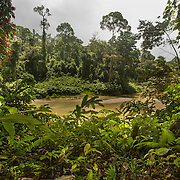 Borneo - Danum Valley Lowland Rainforest