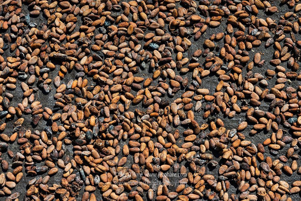 Mengeringkan kacang coklat (Cocoa beans), Bena, Kabupaten Ngada, Flores, Nusa Tenggara Timur, Indonesia