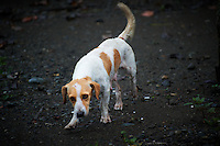 Fido in Costa Rica. Image taken with a Nikon D3s and 70-300 mm VR lens (ISO 320, 270 mm, f/5.6, 1/250 sec).