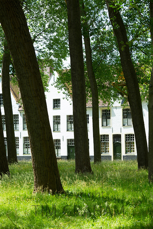 Tall trees at famous Beguinage convent - Begijnhof Benedictine monastery / nunnery for nuns in Bruges - Brugge - Belgium