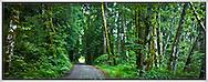 country road in the Green Mountain WA state forest, Kitsap Peninsula, Washington state, US pan