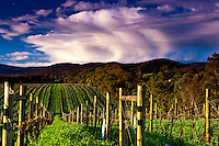 Views across a vineyard just before sunset in Victoria's beautiful Yarra Valley.