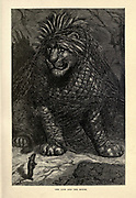The Lion and the Mouse from  AEsop's fables Illustrated by Joseph Benjamin Rundell, and published in London and New York by Cassell Petter and Galpin in 1869