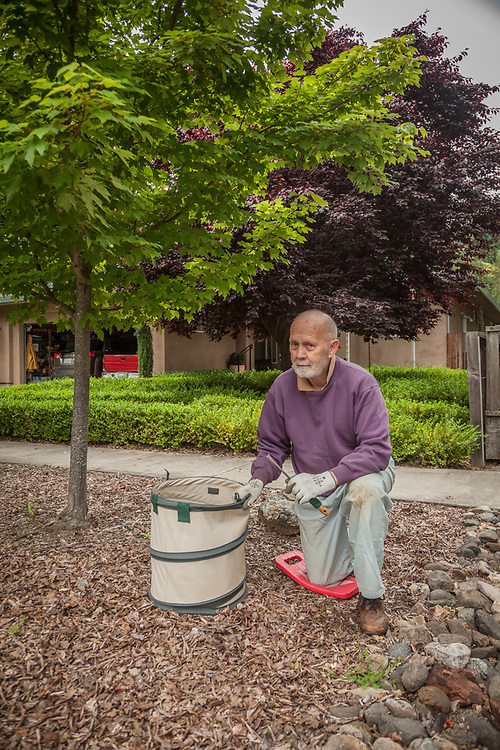 """Thirty year resident of Calistoga Chris Zinn pulls weeds in the front of his home on Myrtle Street.  """"Weeds...I try to get out here after every rain...it's a losing battle."""""""