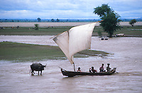 Water buffalo and boat on the Irawaddy River, Burma