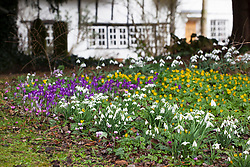 Looking towards the house from the churchyard with snowdrops, crocus and winter aconites in the foreground. Galanthus, Eranthis hyemalis