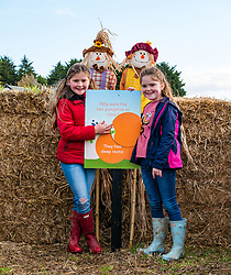 Kilduff Farm, East Lothian, Scotland, United Kingdom, 17 October 2019. Pumpkin Patch: The pick your own pumpkin patch gears up for its opening tomorrow. In its second year, Lucy and Russell Calder and their daughters, Maisie (10 years) and Louisa (8 years) make final preparations for visitors. The patch is open this weekend and next, selling a variety of Halloween carving pumpkins and culinary pumpkins.  A hay bale maze is an added attraction.<br /> <br /> Sally Anderson | EdinburghElitemedia.co.uk