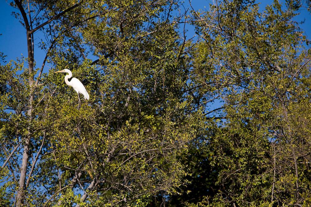 Pirapora_MG, Brasil...Rio Sao Francisco, o rio da integracao nacional. Na foto, fauna da mata ciliar do rio...The Sao Francisco river, It is an important river for Brazil, called the river of national integration. In this photo the birds on the riparian...Foto: LEO DRUMOND / NITRO