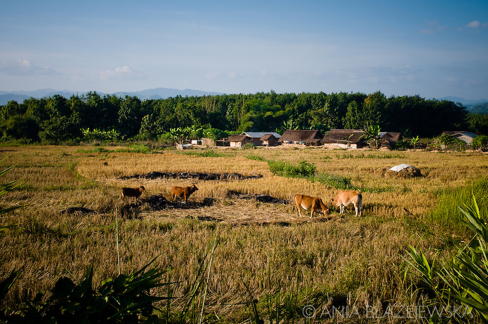 Laos, Luang Nam Tha. One of the villages in the Luang Nam Tha area.
