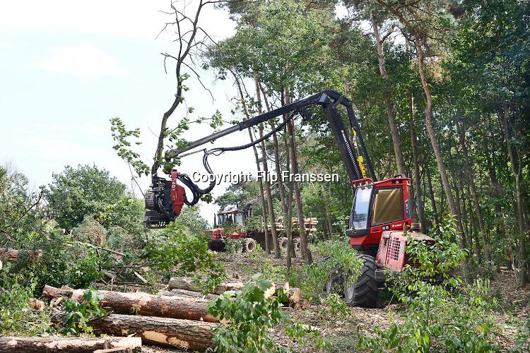 Nederland, Groesbeek, 03-2019Afgelopen weken zijn er in de bossen rond Groesbeek en Mook veel bomen gekapt . Staatsbosbeheer noemt dit oogsten van hout noodzakelijk om de biodiversiteit in de bossen te herstellen en ruimte te geven voor andere soorten flora en fauna, planten en dieren, om te floreren.Foto: Flip Franssen