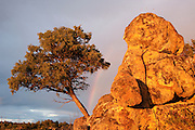 Scenery<br /> Sierra de Andújar Natural Park, Mediterranean woodland of Sierra Morena, north east Jaén Province, Andalusia. SPAIN<br /> <br /> Mission: Iberian Lynx, May 2009<br /> © Pete Oxford / Wild Wonders of Europe<br /> Zaldumbide #506 y Toledo<br /> La Floresta, Quito. ECUADOR<br /> South America<br /> Tel: 593-2-2226958<br /> e-mail: pete@peteoxford.com<br /> www.peteoxford.com