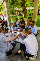 Uyghur men playing cards in Renmin Park. Turpan, Xinjiang Province, China. Turpan is a small oasis town and former Silk Road outpost. Uyghur people are a Central Asian people of Muslim Turkic origin. They are China's largest minority group.